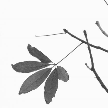 endwiki · 真仙